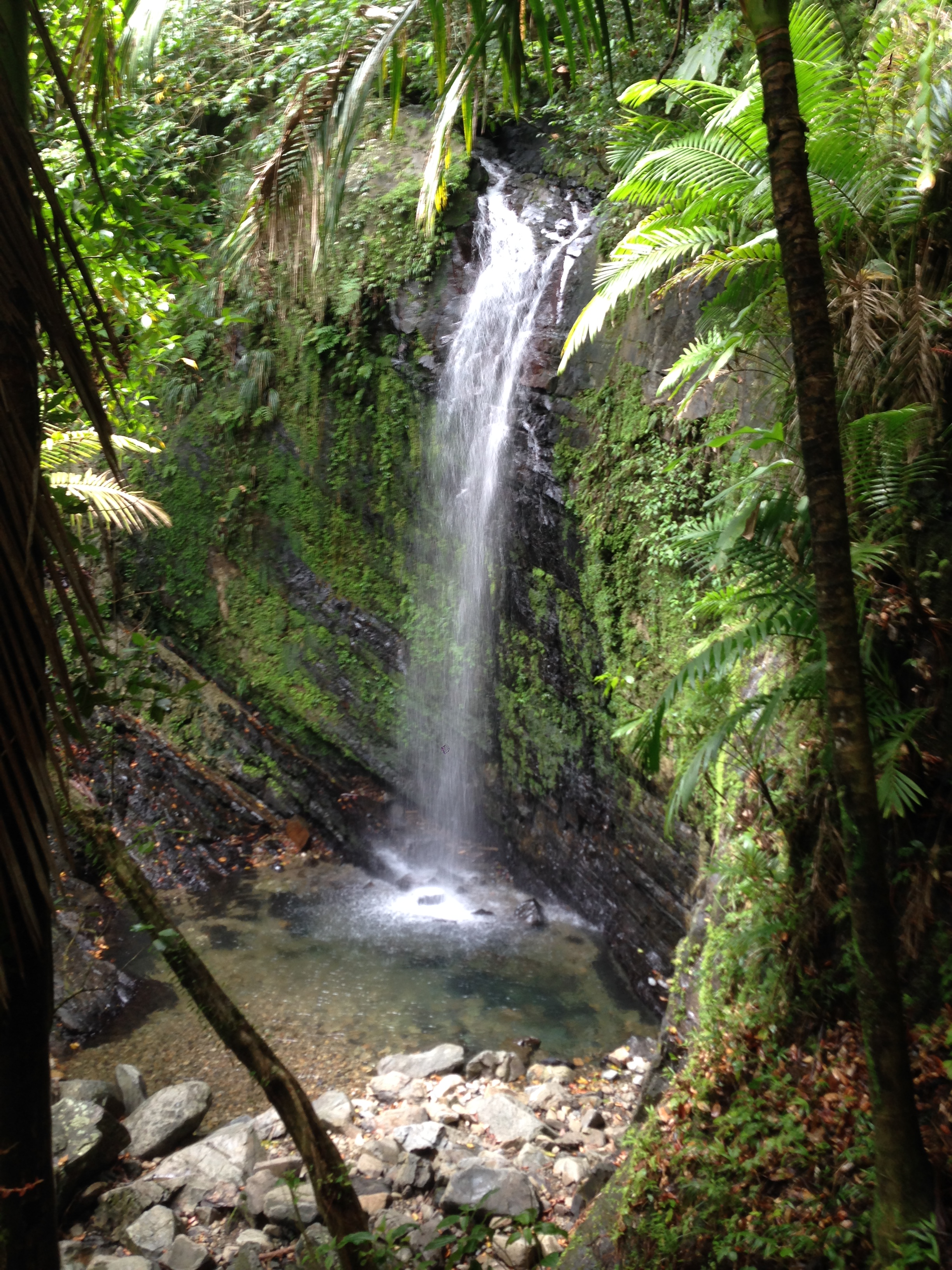 Water falls in El Yunque