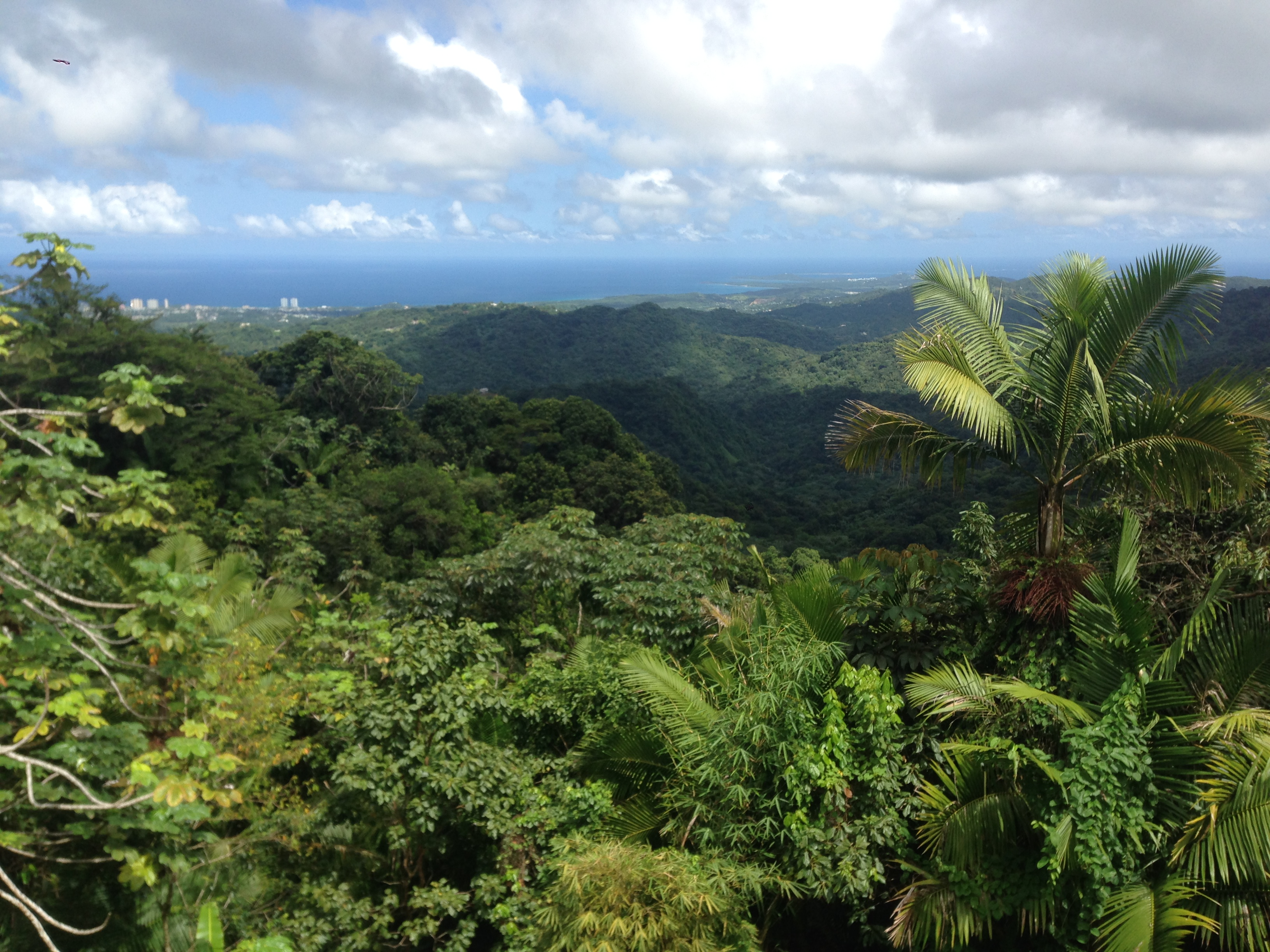From El Yunque
